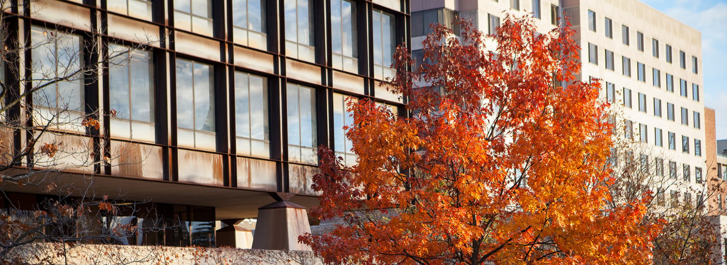 Orange colored leaves on a tree in front of Uris Hall with Statler Hall behind it